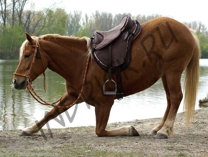 Седло Barefoot Cheyenne Dry-Tex Brown в сборе